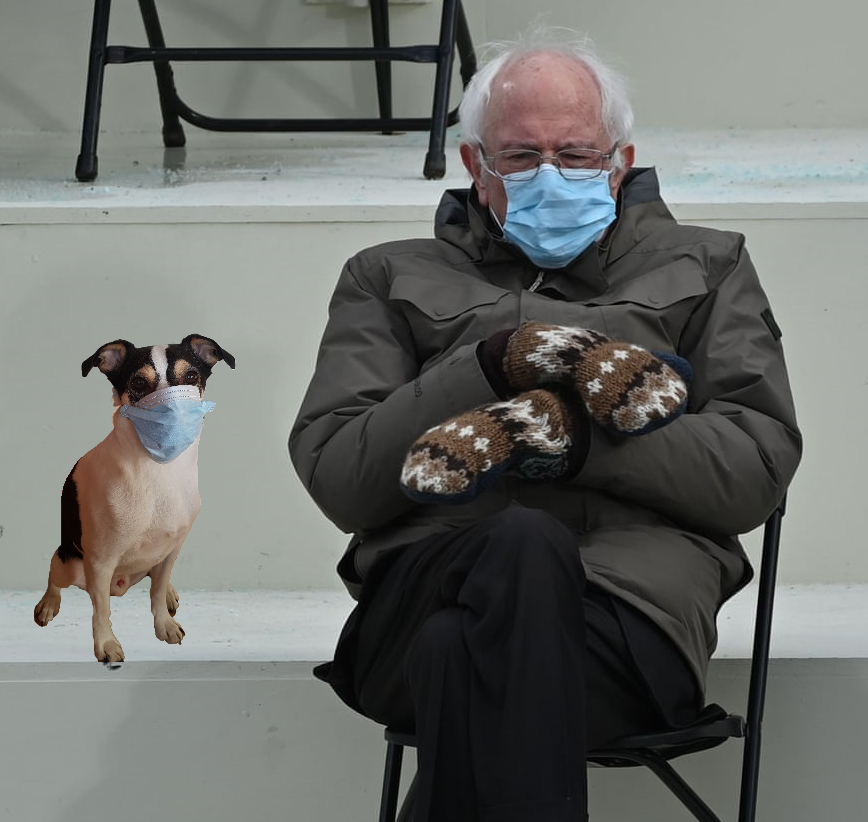 Surgically masked dog sitting next to Bernie Sanders