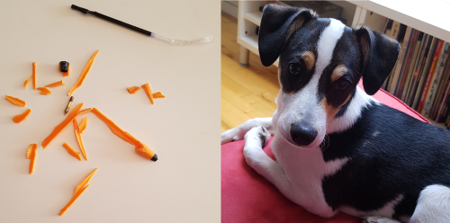 Puppy Dog destroys ballpen