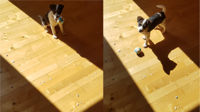 Puppy Dog destroys plastic ball and blames it on a beam of light